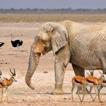 Etosha National Park in Sud Africa