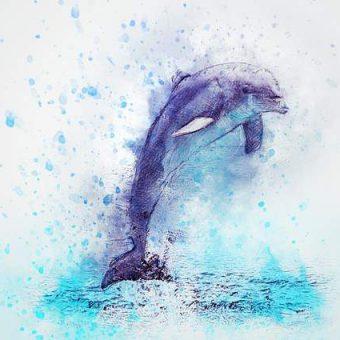 Come disegnare un delfino